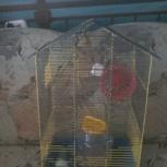 Клетка для птиц или мелких грызунов, Новосибирск