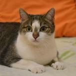 Юная кошка Касенька ищет дом и надежных любящих хозяев, Новосибирск