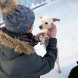 Мелкая собачка Белка., Новосибирск