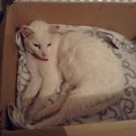 Найден белый кот или кошка, Новосибирск