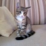 Котик-малыш Никитка (3 месяца), Новосибирск