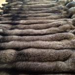 продам шкуры мех лиса чернобурка песец соболь и др., Новосибирск