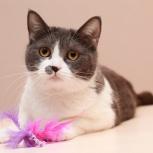 Ищем дом для плюшевой красавицы Шелли – кошачьей звезды!, Новосибирск