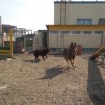 Дрессировка собак спас-001, Новосибирск
