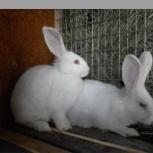 Распродажа  кроликов, Новосибирск