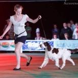 Услуги хендлера (показ собак на выставках), Новосибирск