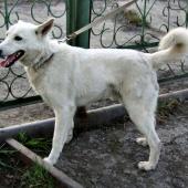 Белый красавчик Бим - пес, Новосибирск