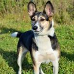 Собака Анфиса в добрые руки, Новосибирск