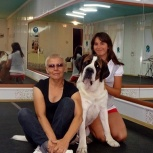 Подготовка собак к выставке - хендлинг, Новосибирск