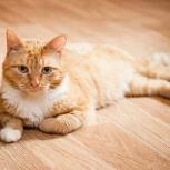 Молодой рыжий котик Юкон ищет дом, Новосибирск