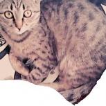 Потерялась кошка, Новосибирск