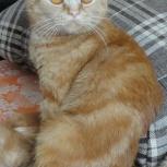 Потерялась кошка рыжего цвета дзержинский район, Новосибирск