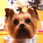 Зоопарикмахер для собак. Более 110 отзывов в группе ВК, Новосибирск