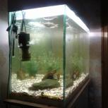Продам аквариум 220 л., Новосибирск