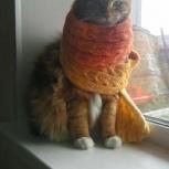 Кот породистый бобтейл Вилли (кастрат), Новосибирск