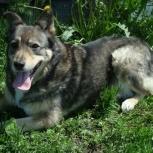 Есть собаки, с которыми человек отдыхает душой – это про Ронду, Новосибирск
