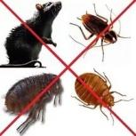 Травим тараканов, клопов эффективно и качественно, Новосибирск