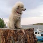 вызов ветеринарного врача на дом, диагностика, лечение, вакцинация, Новосибирск