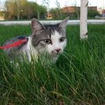 Пропал кот на Фадеева!, Новосибирск