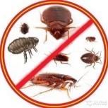 Уничтожение насекомых.Клопов, тараканов и др., Новосибирск