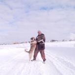 потерялась собака лайка в академгородке, Новосибирск