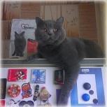Опытный кот (SCS), познакомится с киской (SFS), Новосибирск