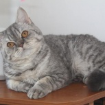 Котик, Новосибирск