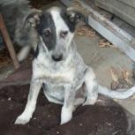 Срочно ищу дом щенку!, Новосибирск