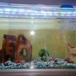 Продажа аквариум, Новосибирск