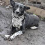 Это Джой - чудо-пёс озорные уши!, Новосибирск
