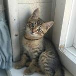 отдам в добрые руки котенка, Новосибирск