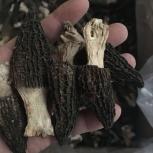 2017 сморчки сушёные оптом | продажа свежих грибов стоимость завода, Новосибирск