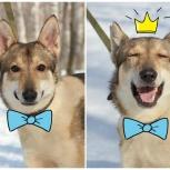 СЕВА - самый милый в мире пёс!, Новосибирск