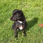 Очень маленький пёсик ищет новый дом, Новосибирск
