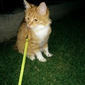 Отдам взрослую кошку, Новосибирск