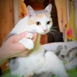 Молоденькая кошечка черепахового окраса в добрые руки, Новосибирск