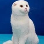 Кот ищет невесту, Новосибирск