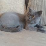 Груминг кошек, Новосибирск