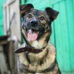 По-кошачьи ласковая и уютная молодая собака-компаньон!, Новосибирск