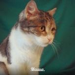 кошка Маша - одинокая душа., Новосибирск