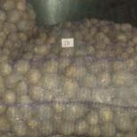 Картофель оптом от производителя, Новосибирск
