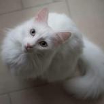 Белый котик, Новосибирск