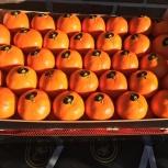 Продаем мандарины из Испании, Новосибирск