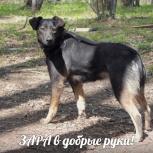 Зара ищет ответственных хозяев, Новосибирск