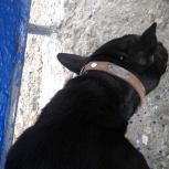 Найдена собака, кобель, Новосибирск