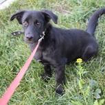 Небольшая собачка Торри, 6 месяцев, Новосибирск