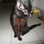 Найден черный котик, Новосибирск