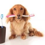 Ультразвуковая чистка зубов у вас дома собакам и кошкам без наркоза, Новосибирск