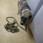 молодая собачка ищет старых или новых хозяев, Новосибирск