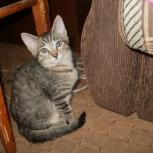 Отдам котенка в добрые руки (девочка, возраст 10 месяцев), Новосибирск